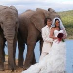 buffelsdrift_game_lodge_wedding_elephants