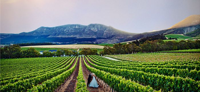 Wedding In The Cape Wine Lands South African Wedding Venues